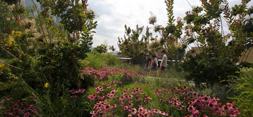 The splendor of the summer garden list image