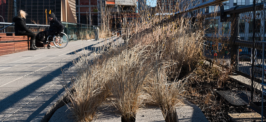 Photo of the week dried grasses at the rail yards list image